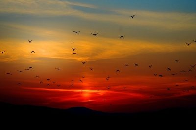 カラスの群れ(Giani PraleaによるPixabayからの画像 )