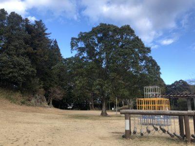 公園にあるクスノキ