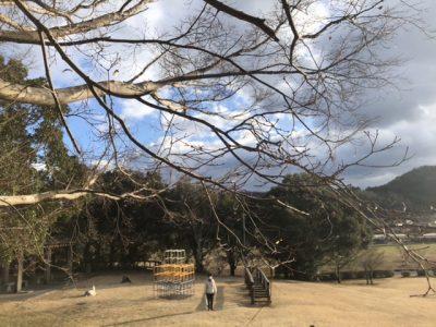モミジの枝
