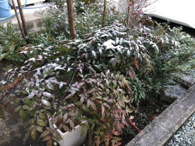 年明けの雪1